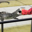 Stock Photo: Corcodile show