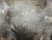 Textura elefante tailandés skine — Foto de Stock