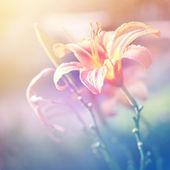 Fundo floral — Foto Stock