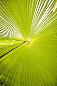 Large green palm leave — Stock Photo