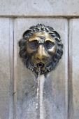 Lion faucet — Stock Photo
