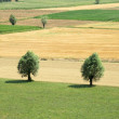 Stock Photo: Countryside