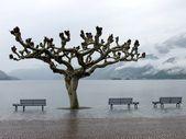 View of lake Maggiore in Ascona. Ticino, Switzerland — Stock Photo