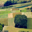 Green field layers aerial view — Stock Photo #11814588