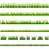 Collection of different types of green grass — Vecteur