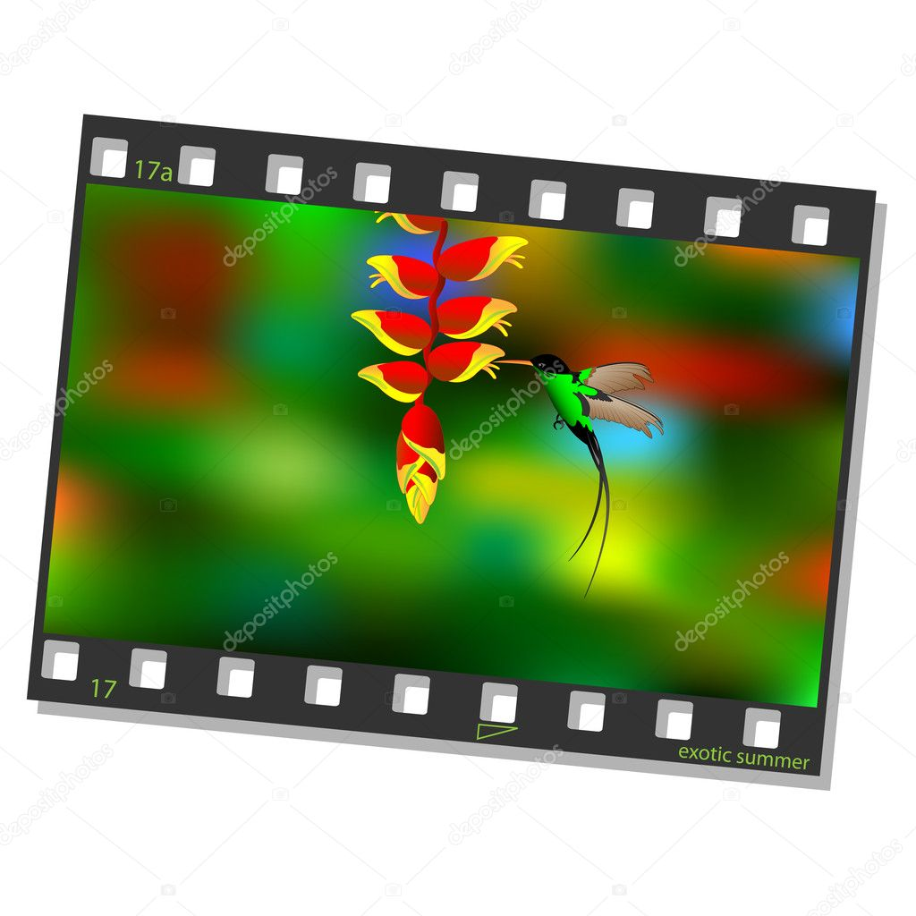 Film frame with hummingbird. Vector illustration — Stock Vector #11091272