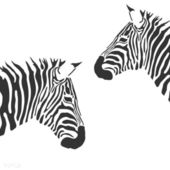 Vector zebra — Stock Vector