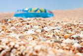 Drcené mušle s pobřežím — Stock fotografie