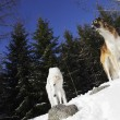 Borzoi, sight-hounds in winter landscape — Stock Photo