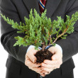 Ecology and Business — Stock Photo