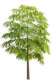Isolated tree — Stock Photo