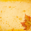Maple leaves grunge paper for background - Stock Photo