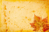Maple leaves grunge paper for background — Stock Photo