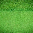 Real green grass background — Stock Photo