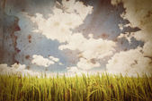 Paddy rice on extra large old grunge paper for background — 图库照片