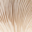 Close up mushroom — Stock Photo