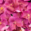 Pink orchid background — Stock Photo