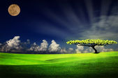 Alone tree on grass field — Stock Photo