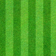 Real green grass field background — Stock fotografie