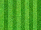 Real green grass field background — Stock Photo