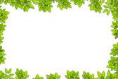 Bladeren gebruiken voor achtergrond — Stockfoto