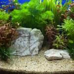 Plant aquarium — Stock Photo