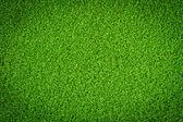 Groen gras achtergrond — Stockfoto