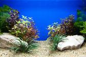 Pflanzen aquarium — Stockfoto