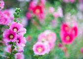 Beautifull flowers — Stock Photo