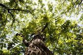 Bos bomen. natuur groen hout zonlicht achtergronden. — Stockfoto
