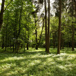 Sunshine in the green forest — Stock Photo #11820772