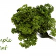 Bunch of fresh parsley on a fork isolated over white background. — Stock Photo