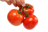 Beautiful woman's hand with a fresh tomato, isolated on white. — Stock Photo