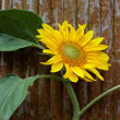 Sunflowers on a wooden background. - Stock Photo