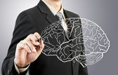 Business man drawing human brain diagram — Foto de Stock