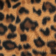 Leopard or jaguar skin pattern background — Stock fotografie #12038169