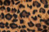 Leopard of jaguar huid patroon achtergrond — Stockfoto