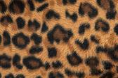 Leopard or jaguar skin pattern background — Stock Photo