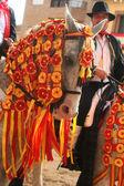 Caparisoned horse racing El Carpio de Tajo, Toledo, 25/07/2012 — Stock Photo
