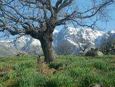 Gredos Mountain, Ávila, Spain — Stock Photo
