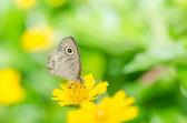 Butterfly macro in green nature — ストック写真