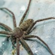 Spider in nature — 图库照片