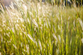 Wild grass in bright sunset — Stock Photo