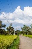 Risfält och road — Stockfoto