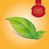 Hoja de té verde puro — Vector de stock