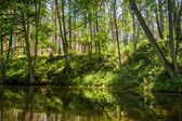 Summer view of the river in forest — Foto Stock