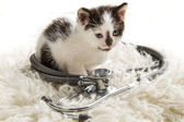 Doctor for small kittens — Stock Photo