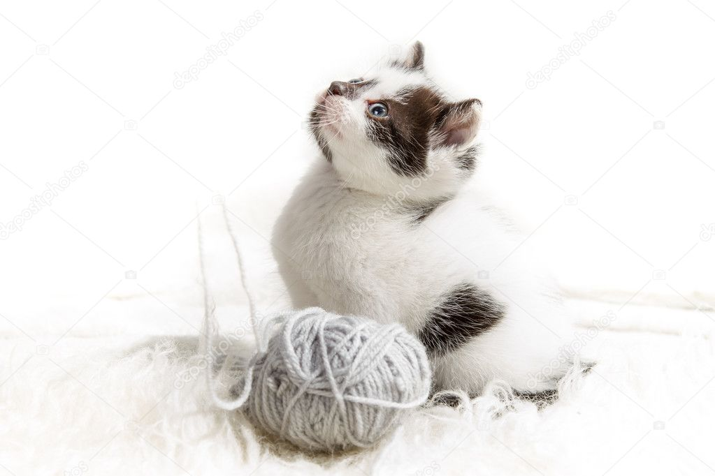 Kitten and a ball of hank — Stock Photo #11858311