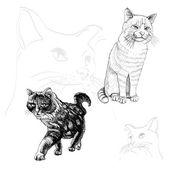 大纲猫 — 图库矢量图片