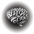 Whole human brain — Stock Photo